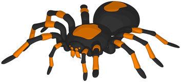 Tarantula clipart #19, Download drawings