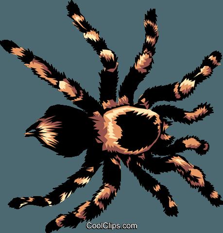 Tarantula clipart #5, Download drawings
