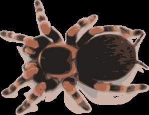 Tarantula clipart #13, Download drawings