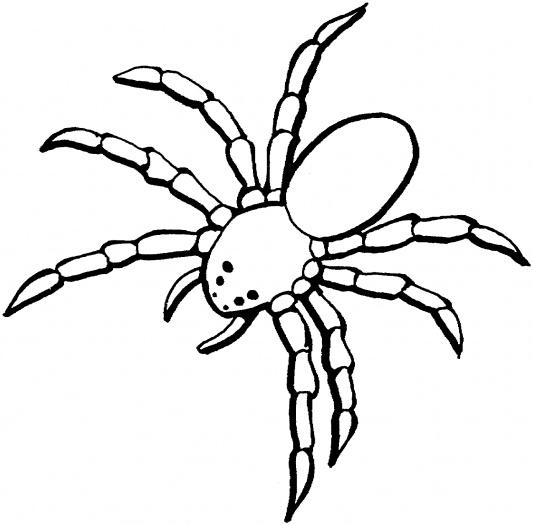 Tarantula coloring #2, Download drawings
