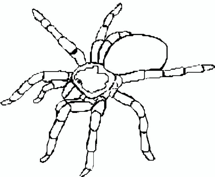 Tarantula coloring #7, Download drawings