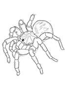 Tarantula coloring #12, Download drawings