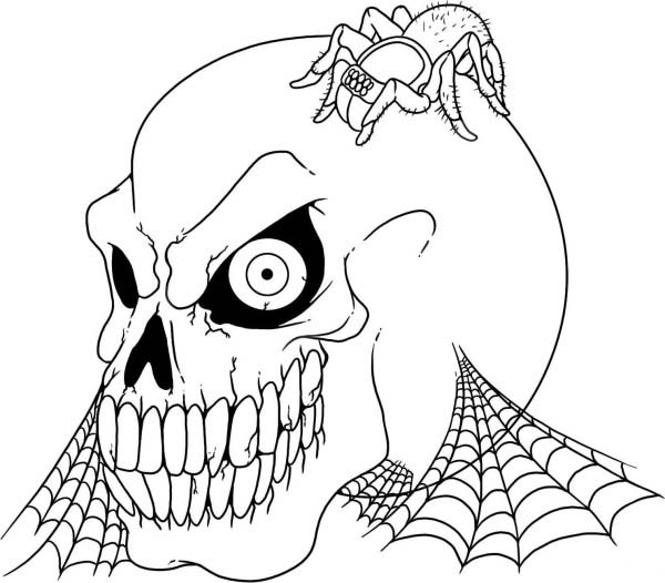 Tarantula coloring #6, Download drawings