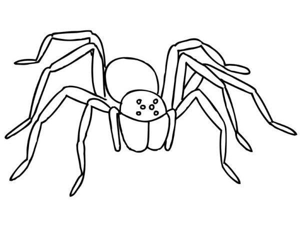 Tarantula coloring #9, Download drawings