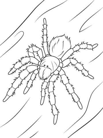 Tarantula coloring #15, Download drawings