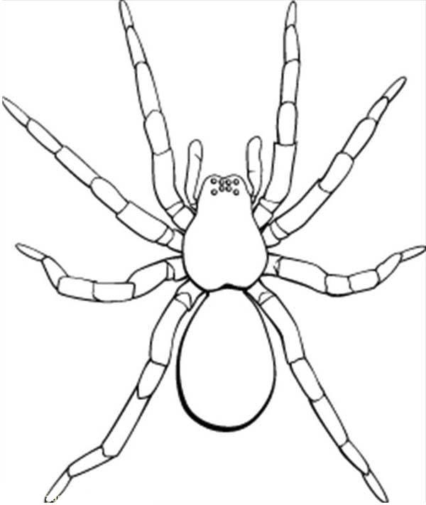 Tarantula coloring #17, Download drawings