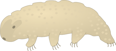 Tardigrade svg #18, Download drawings
