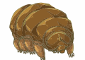 Tardigrade svg #19, Download drawings