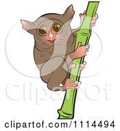 Tarsier clipart #13, Download drawings