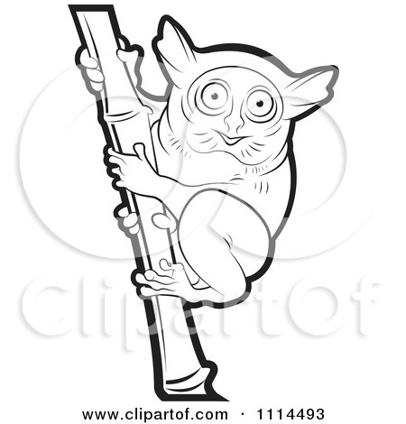 Tarsier clipart #9, Download drawings