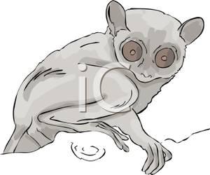 Tarsier clipart #4, Download drawings