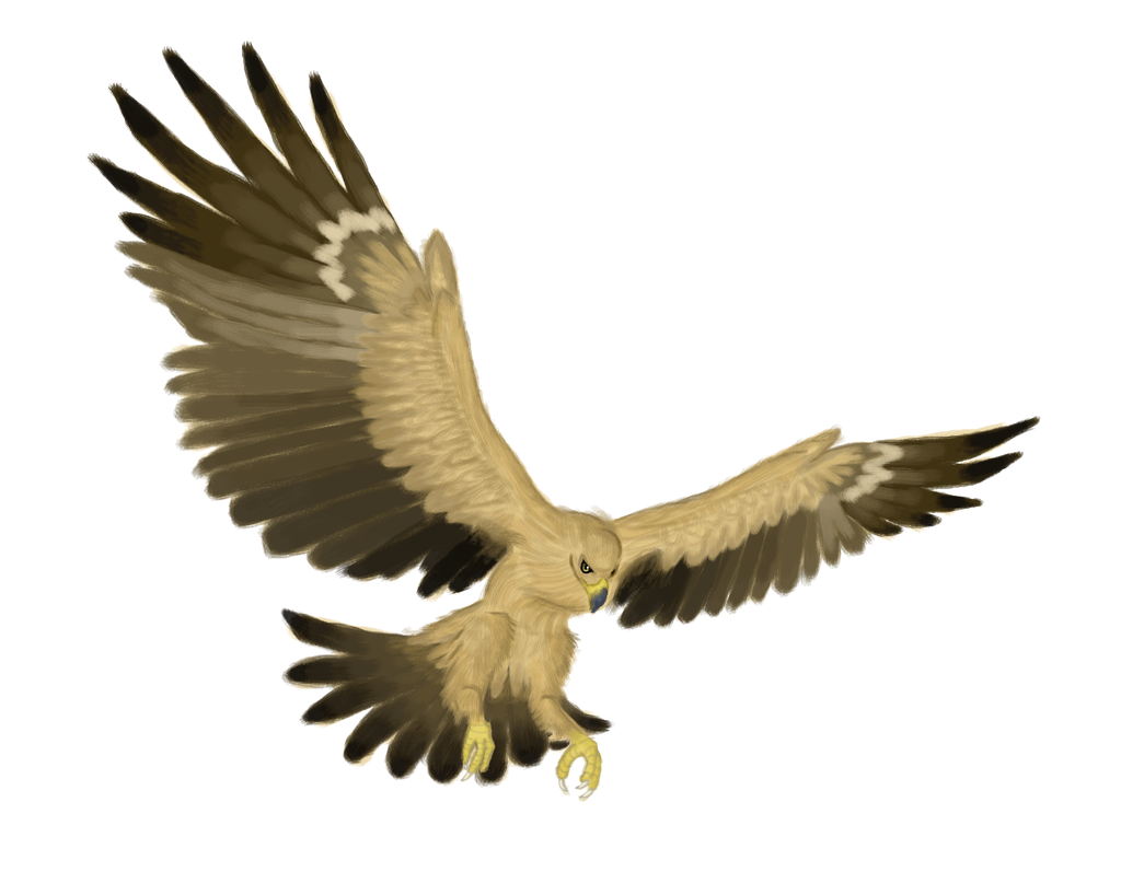 Tawny Eagle clipart #1, Download drawings