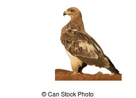 Tawny Eagle clipart #5, Download drawings