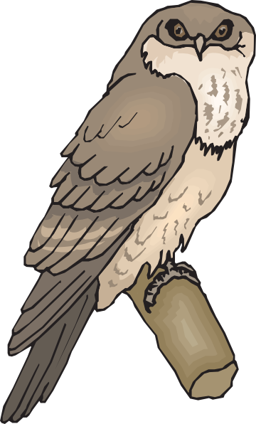 Tawny Frogmouth clipart #19, Download drawings