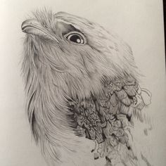 Tawny Frogmouth svg #2, Download drawings