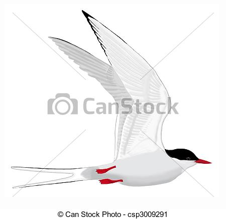 Tern clipart #10, Download drawings