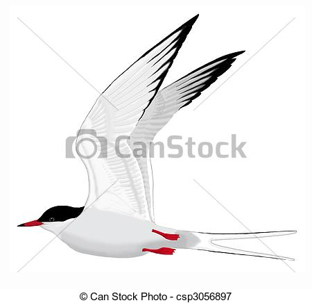 Tern clipart #15, Download drawings