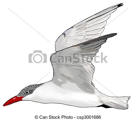 Tern clipart #16, Download drawings
