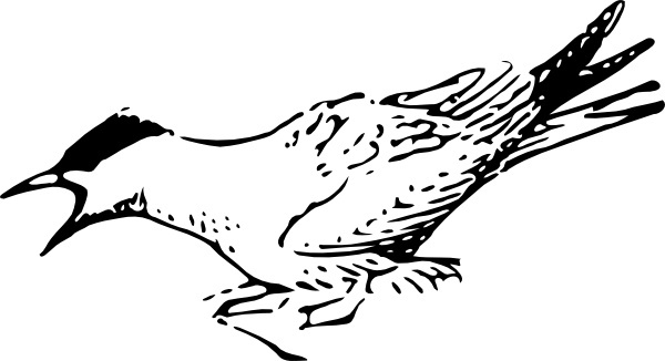 Terns clipart #9, Download drawings