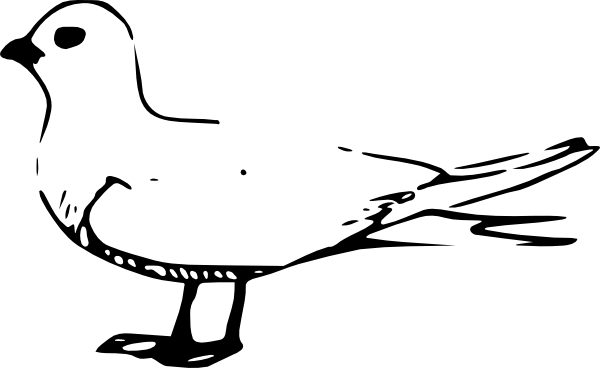 Terns clipart #17, Download drawings