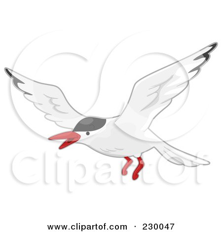 Terns clipart #13, Download drawings