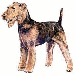 Terrier clipart #14, Download drawings