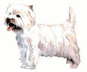 Terrier clipart #5, Download drawings