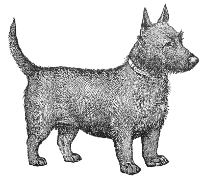 Terrier clipart #3, Download drawings