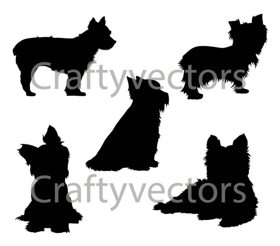 Yorkshire Terrier svg #13, Download drawings