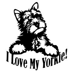 Yorkshire Terrier svg #11, Download drawings