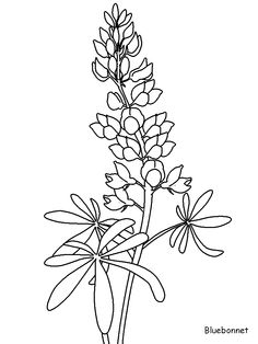 Texas Bluebonnets clipart #19, Download drawings
