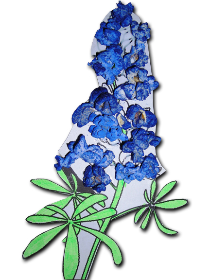 Texas Bluebonnets clipart #16, Download drawings