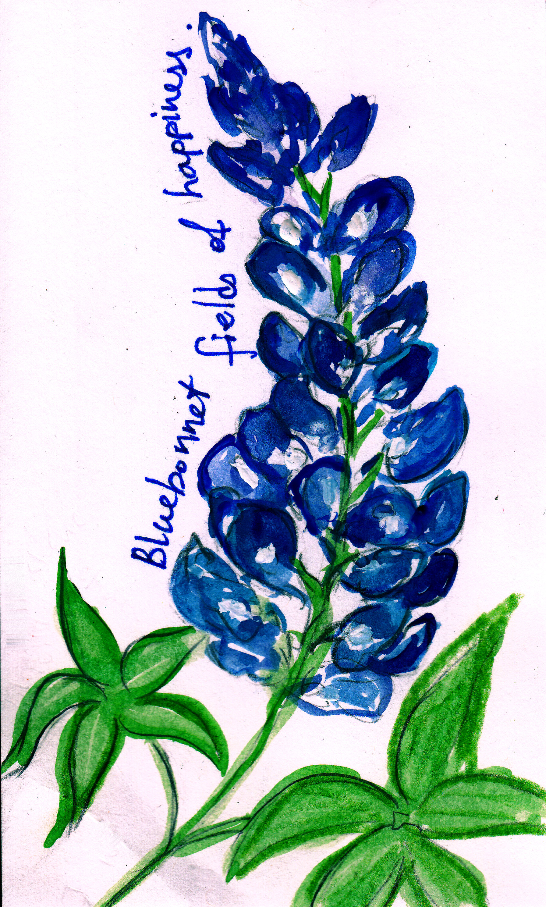 Texas Bluebonnets clipart #20, Download drawings