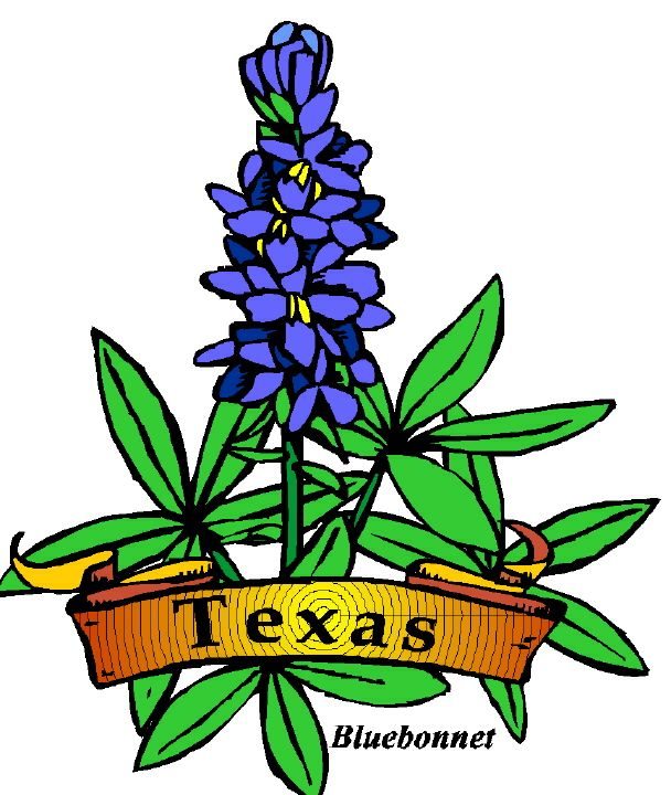 Texas Bluebonnets clipart #8, Download drawings
