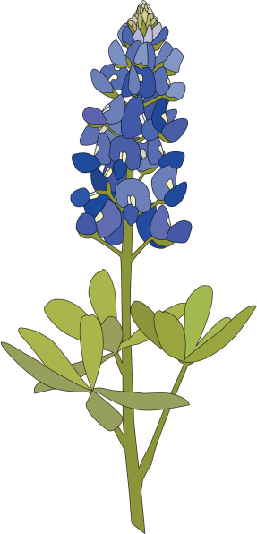 Texas Bluebonnets clipart #2, Download drawings