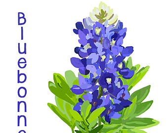 Texas Bluebonnets clipart #6, Download drawings