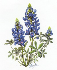 Texas Bluebonnets clipart #3, Download drawings