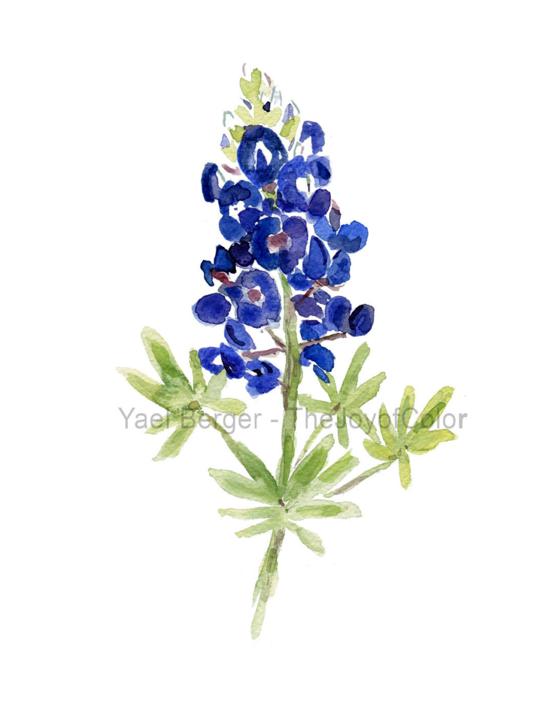 Texas Bluebonnets clipart #4, Download drawings