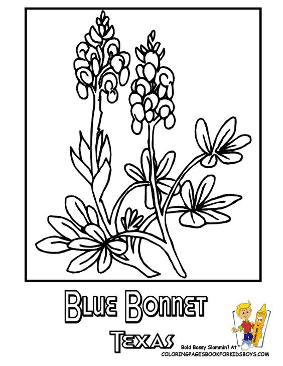 Texas Bluebonnets coloring #12, Download drawings