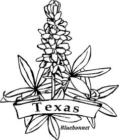 Texas Bluebonnets coloring #9, Download drawings