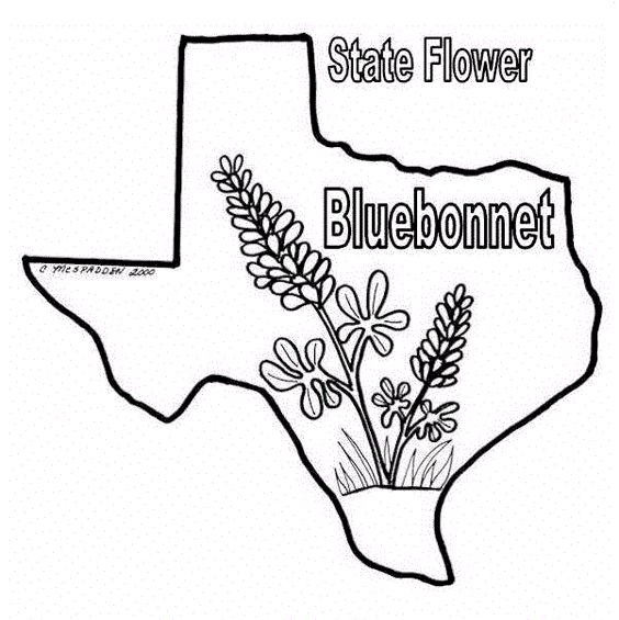 Texas Bluebonnets coloring #11, Download drawings