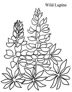 Texas Bluebonnets coloring #4, Download drawings