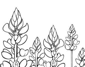 Texas Bluebonnets coloring #14, Download drawings