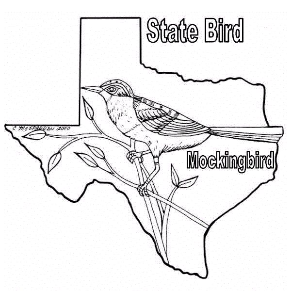 Texas Coloring Download Mockingbird Colored Drawing