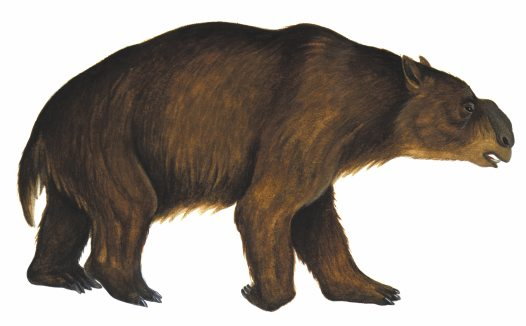 The Diprotodon clipart #11, Download drawings
