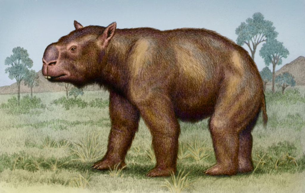 The Diprotodon clipart #5, Download drawings
