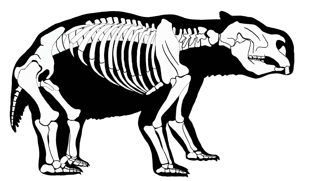 The Diprotodon clipart #3, Download drawings