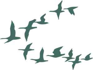 The Flock clipart #20, Download drawings