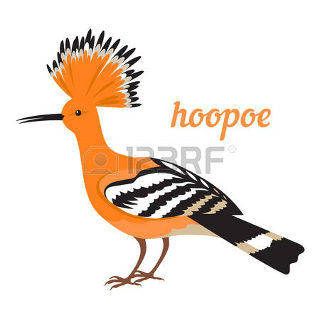 The Hoopoe Close Up clipart #15, Download drawings