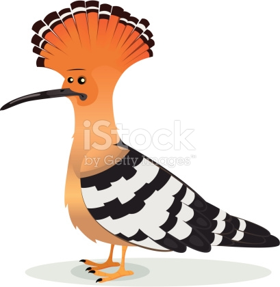 The Hoopoe Close Up clipart #16, Download drawings